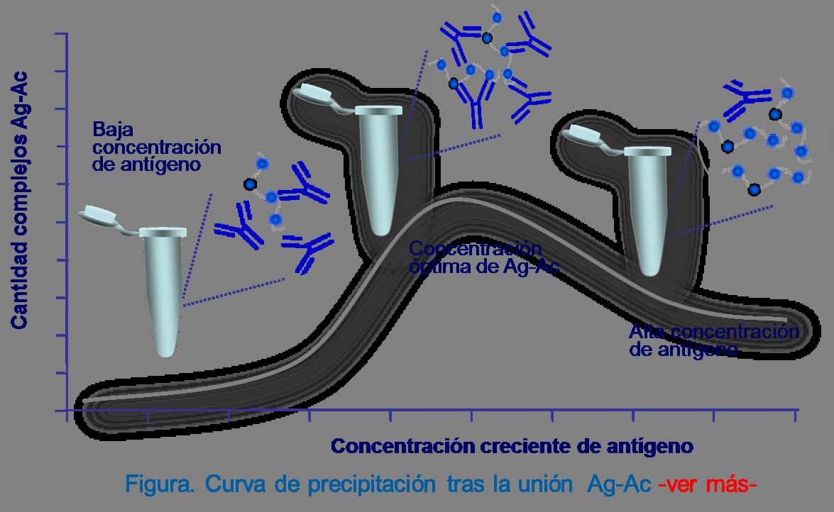 Curva de precipitación obtenida mezclando concentraciones crecientes de antígeno con una cantidad constante de anticuerpo. La precipitación es máxima allí donde la proporción entre ambos es óptima (parte central de la curva)